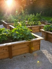 Preparing an old garden bed or renewing a vegetable patch