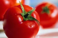 Tomato - Lycopersicon esculentum