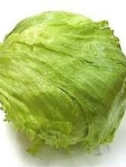 Lettuce – lactuca sativa